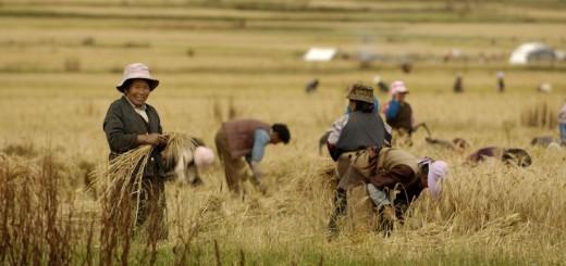 Is er genoeg voedsel op de wereld voor China?