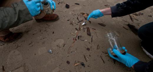 Micro- en nanoplastic in zee gevaarlijker dan gedacht