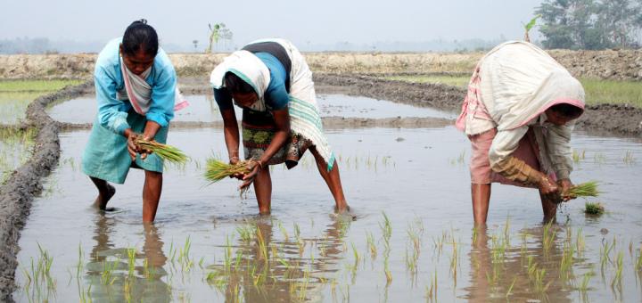 Landbouw van de toekomst noodgedwongen aangewezen op kunstmest
